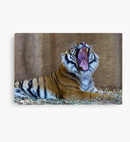 Panthera tigris sumatrae Canvas Print