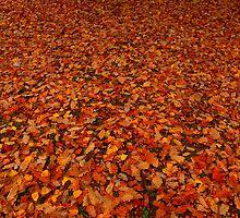 les feuilles mortes se ramassent à la pelle, les souvenirs et les regrets aussi............. by supergold