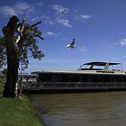 Luxury Houseboat On The Murray River by Noel Elliot