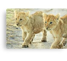 Twin Cubs Canvas Print