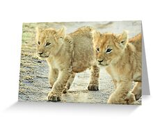Twin Cubs Greeting Card