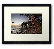 Crab Claw Mangroves. Framed Print