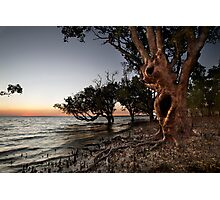 Crab Claw Mangroves. Photographic Print