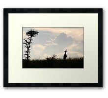 Impala, Uganda Framed Print