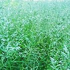 Splendor in the Grass by Redviolin