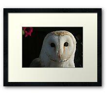 Barn Owl Staring Framed Print