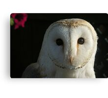 Barn Owl Staring Canvas Print