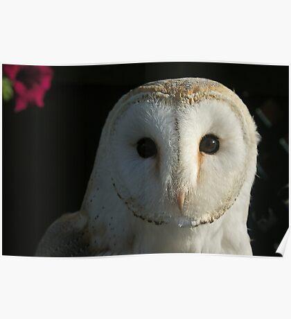 Barn Owl Staring Poster