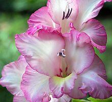 Floral Elegance by Lynn Gedeon