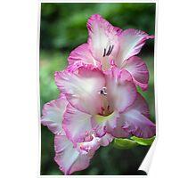Floral Elegance Poster
