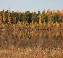 Sunsetting On The Tamaracks by Tracy Faught