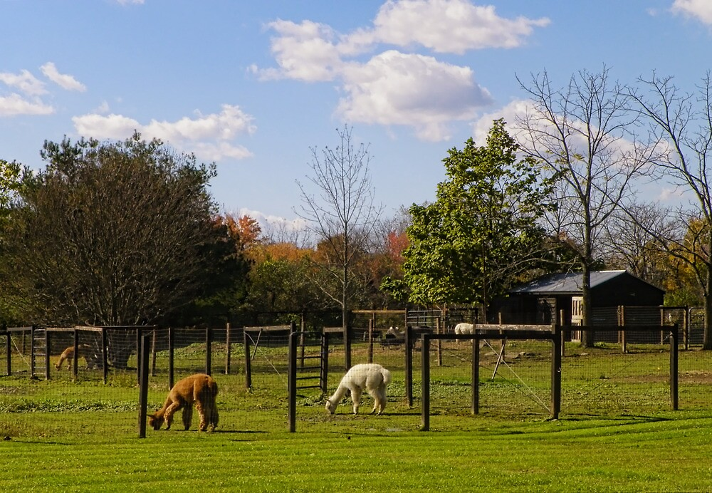 Life on a Farm by Pamela Phelps