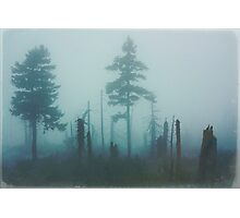Dark forest Photographic Print