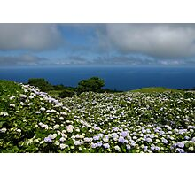 Hydrangeas in Horta, Azores Photographic Print