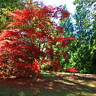The Acer in the pack by John Dalkin