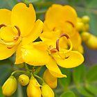 Pretty Yellow Flower by Sam Matzen
