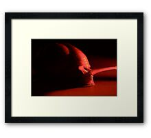Snail in the Red Framed Print