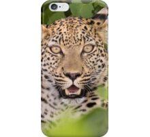 Leopard in hiding iPhone Case/Skin