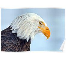 Bald Eagle Portrait / Portrait d'une Pygargue à tête blanche Poster