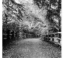 Woody Trail in Farmleigh, Dublin Photographic Print