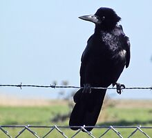 One little black bird by buddybetsy