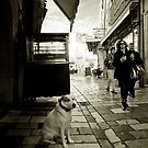 Sad dog in Hyeres France by benjy