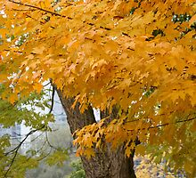 Splash of Yellow by Jason Dymock Photography