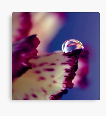 Colour of Life XXXII [square] Canvas Print