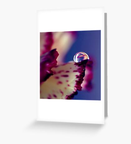 Colour of Life XXXII [square] Greeting Card