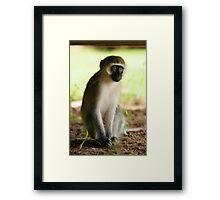 The Stare - Kenyan Monkey Framed Print