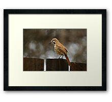 Perched Bird - Kenya Framed Print