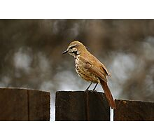 Perched Bird - Kenya Photographic Print