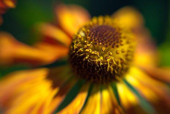 Autumn Gold by Kasia-D