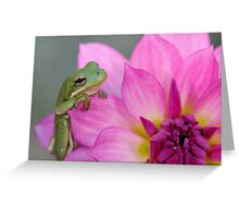 Green tree frog + pink dahlia Greeting Card