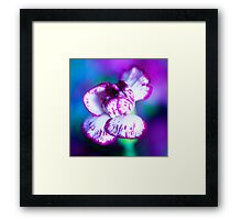 Colour of Life XII [square] Framed Print