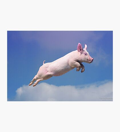 And Pigs Can Fly Photographic Print
