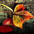 colorful autumn by Mustafa UZEL