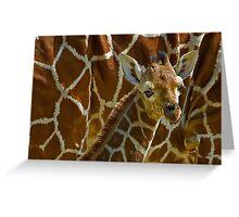 Giraffe redux Greeting Card