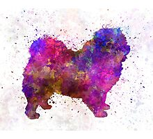 Chow-chow in watercolor Photographic Print