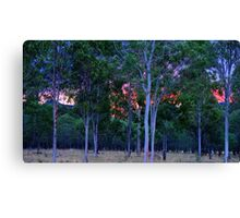 Sunset in the bush Canvas Print