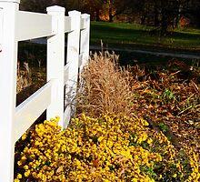 Golden Autumn by kkphoto1