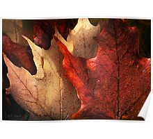 Layered Leaves Poster
