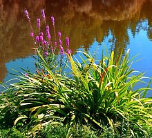 Flowers at the pond by Patrick Jobst