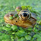The Frog King by Istvan Natart