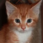 Orange Tabby by DebbieCHayes