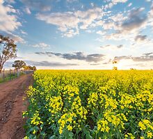 Pathway to canola by Maddison Falls
