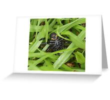 Just a Friend ~ Not! Underbelly for ID Me ~ Nature Greeting Card