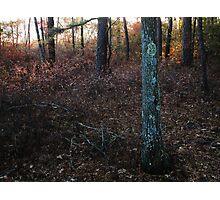 November Rainbow Photographic Print