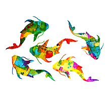 Koi of Colors Swim Photographic Print