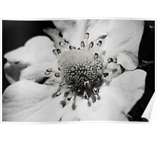 B&W Strawberry Flower Poster